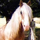 Copyright Free Horse pictures - http://www.copyright-free-photos.org.uk
